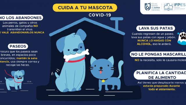 Cuida tus mascotas